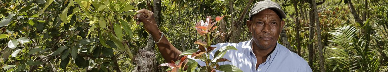Avacado farmer in the Dominican Republic
