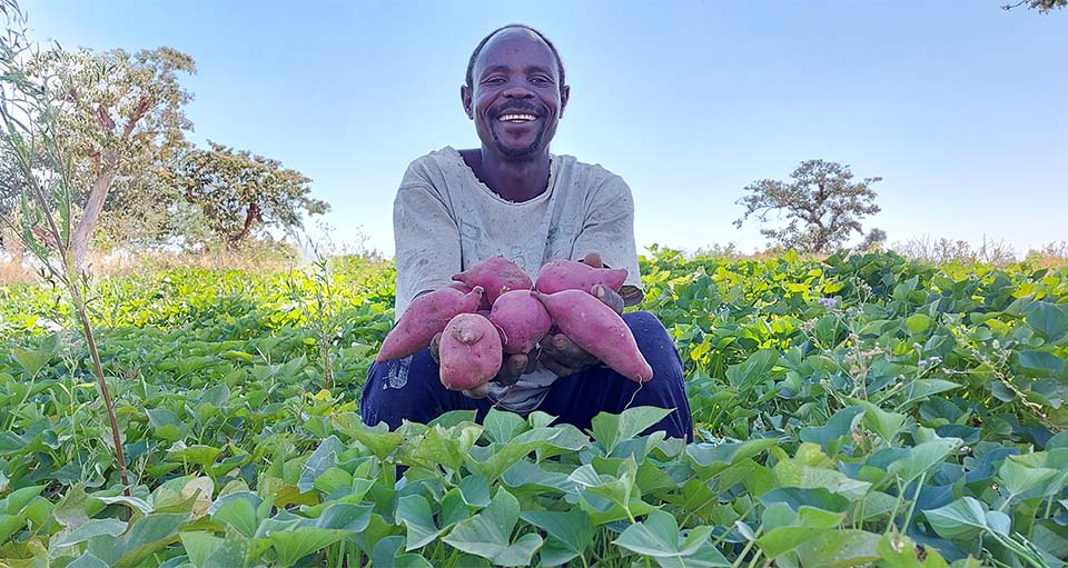 Sudanese farmer holding crops in his field
