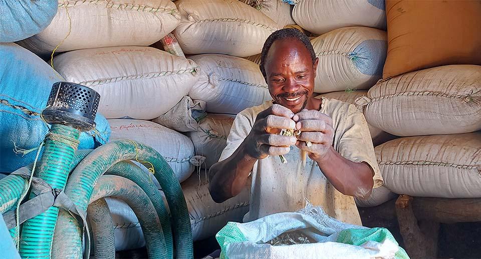 Sudanese farmer stores crops