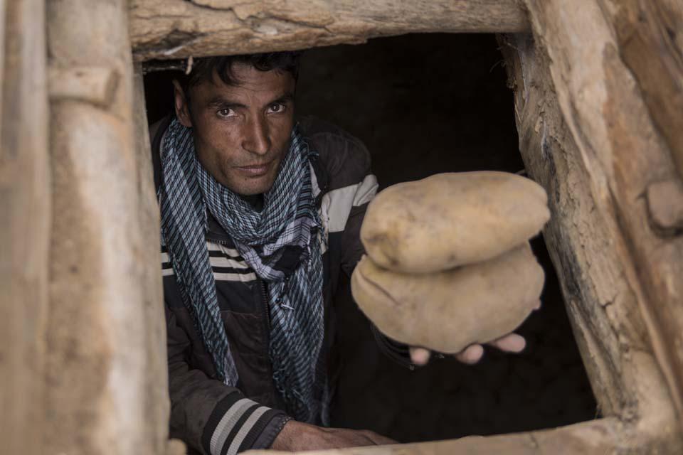 Afghanistan farmer holding potatoes