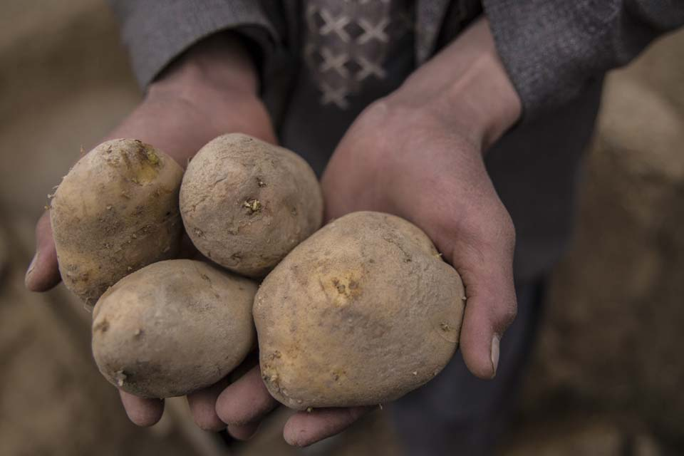 Afghanistan potato storage