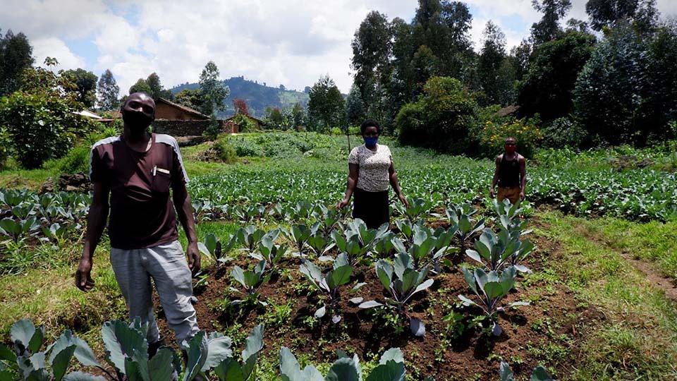farmers tend a field in Rwanda
