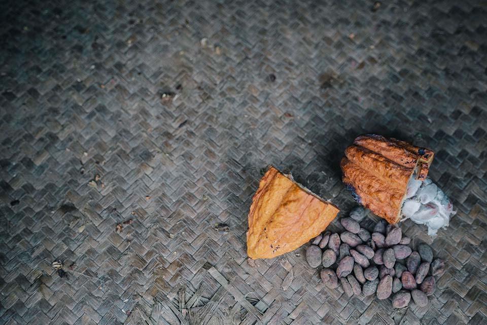 cacao pod broken open to reveal beans