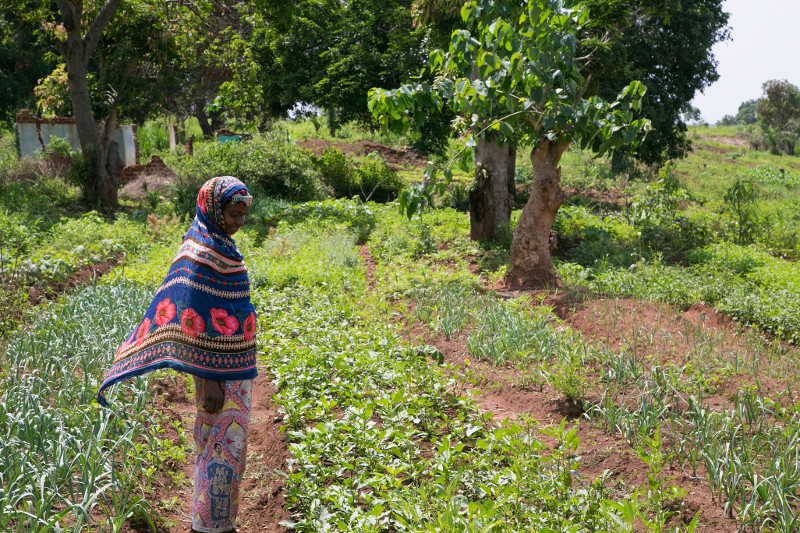 Flourishing gardens, planted with seeds and tools distributed by CRS, are a sign of hope in Boda, Central African Republic. Photo by Michael Stulman/CRS