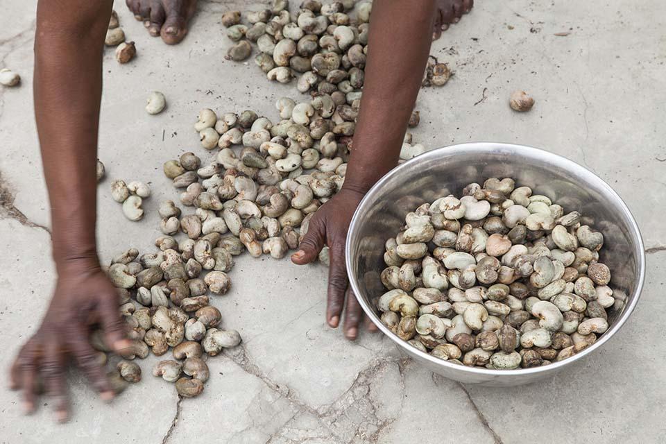 cashew sorting in Benin
