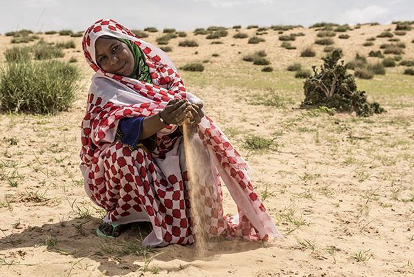 Farmer in Chad harvests in desert