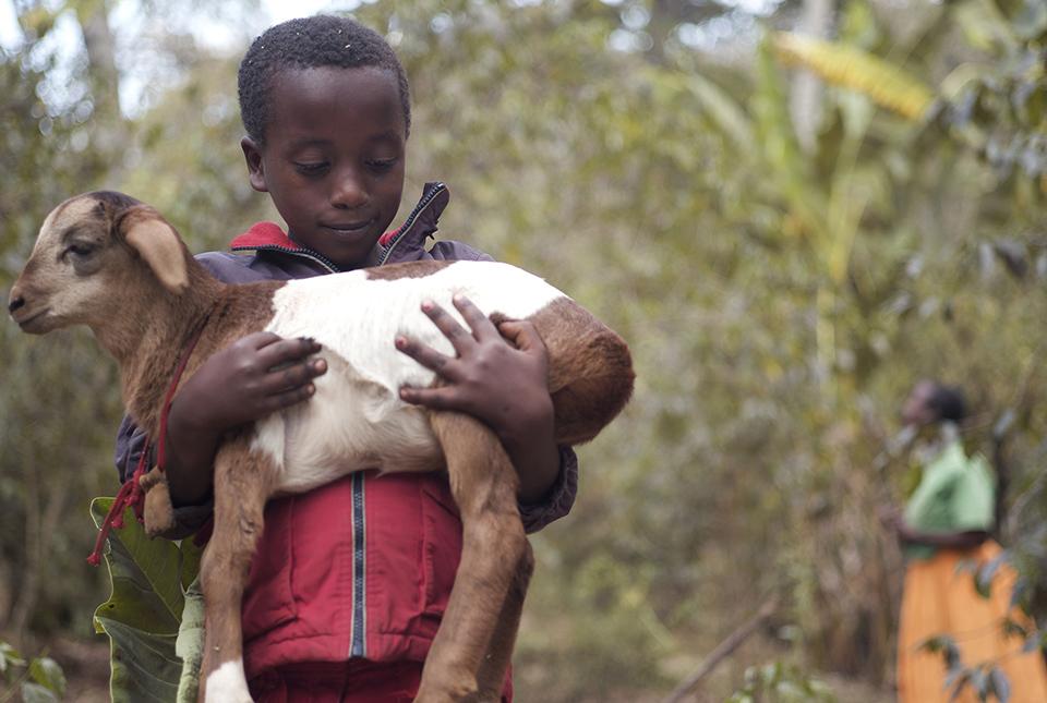 child holding lamb in Ethiopia