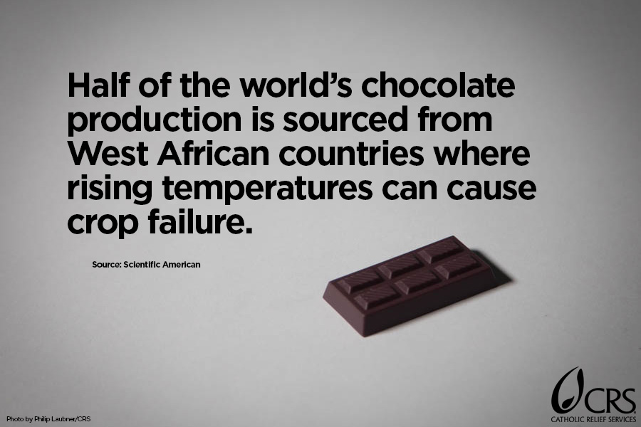 Half of the world's chocolate production is sourced from West African countries where rising temperatures can cause crop failure.