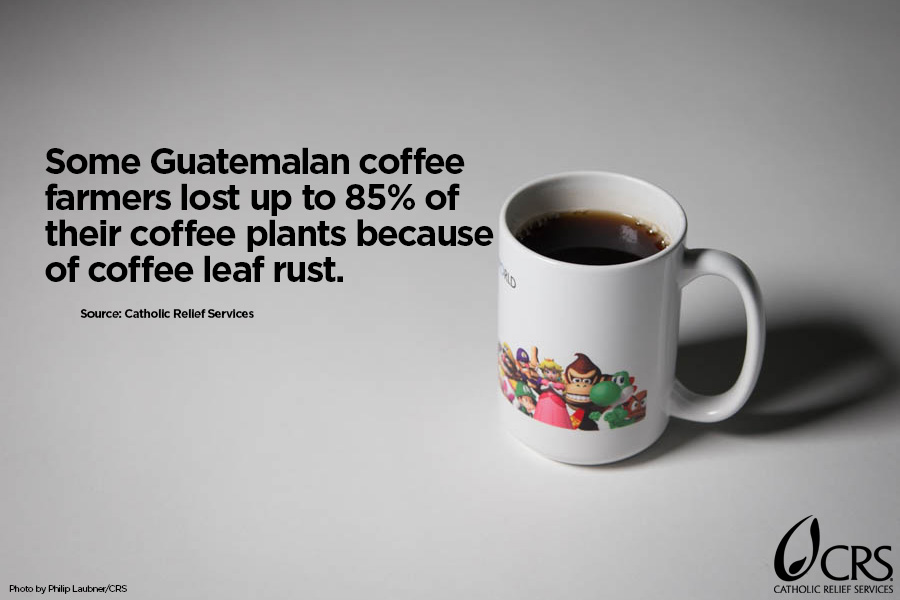 Some Guatemalan coffee farmers lost up to 85% of their coffee plants because of coffee leaf rust.