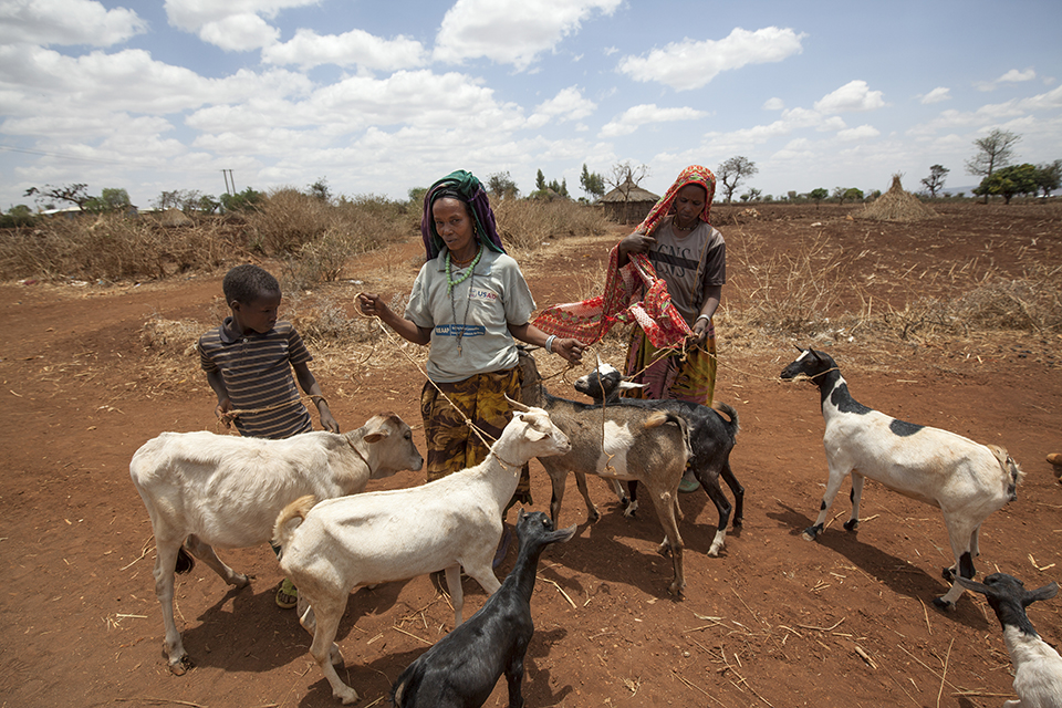 Reason for foreign aid #5: Mitigate the devastating impact of drought in Ethiopia by providing new farming practices and technologies