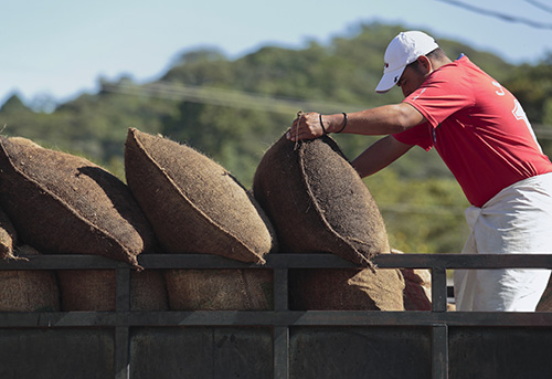 A worker in El Salvador loads bags of dried coffee beans destined for a local processing plant. Photo by Oscar Leiva/Silverlight for CRS