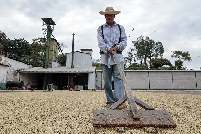 A worker tends a coffee drying patio in El Salvador. Photo by Oscar Leiva/Silverlight for CRS