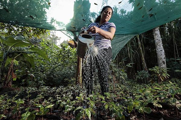 Oneida Gómez waters her coffee plant nursery in Canton Las Quebradas, El Salvador. Photo by Oscar Leiva/Silverlight for CRS