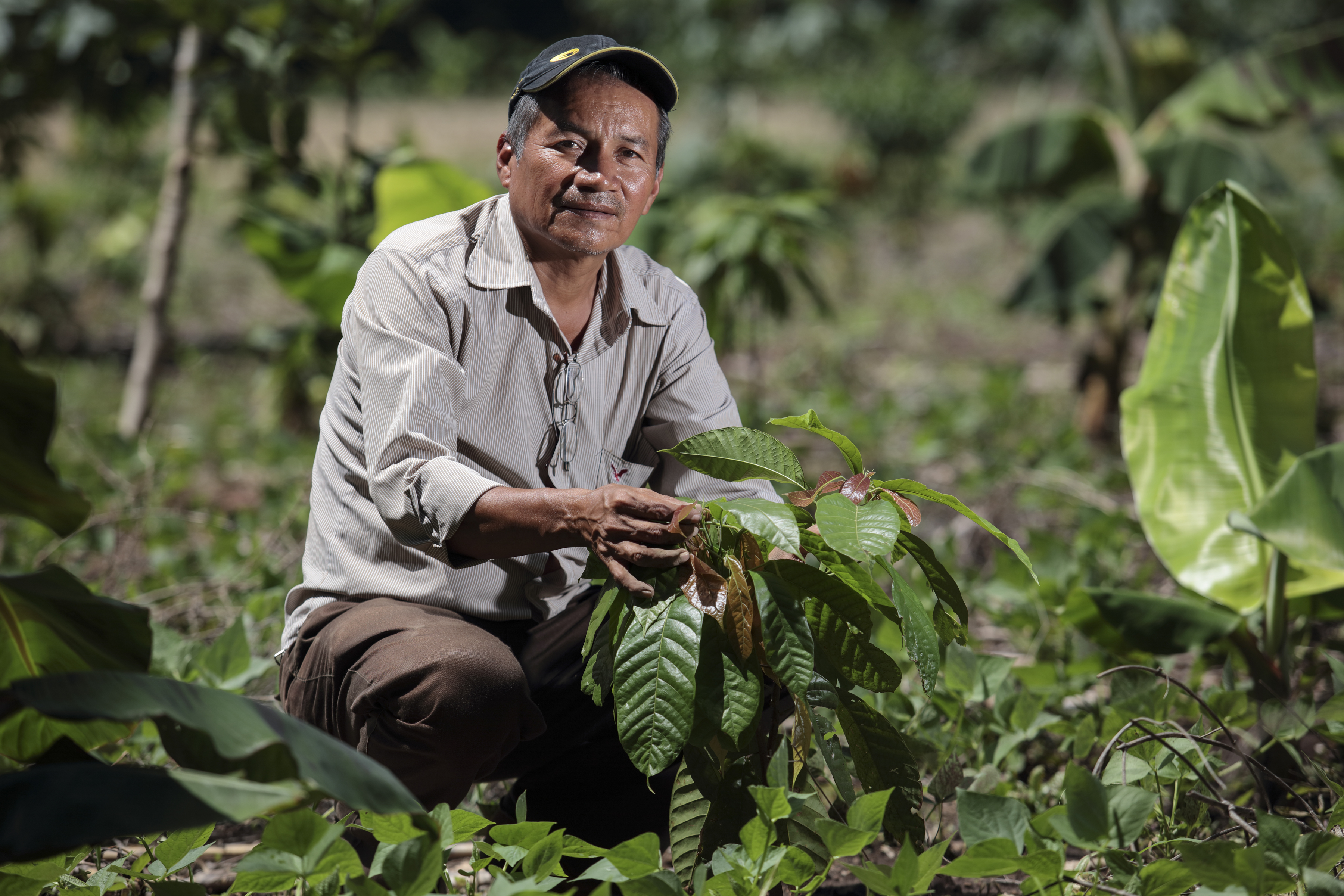 Simon Perez shows off his newly planted cacao trees. Photo by Oscar Leiva/Silverlight for CRS