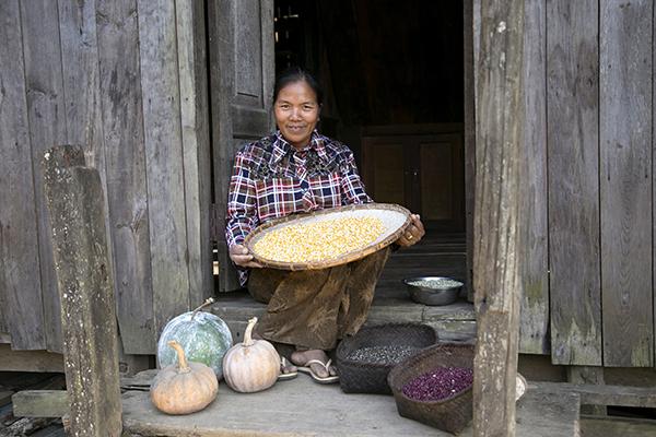 enoying harvest in myanmar