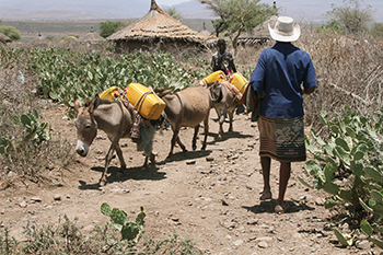 A CRS project is helping dried up villages like Meiso, home to Jemal Bedhaso, reduce the effects of climate change. Photo by Kim Pozniak/CRS