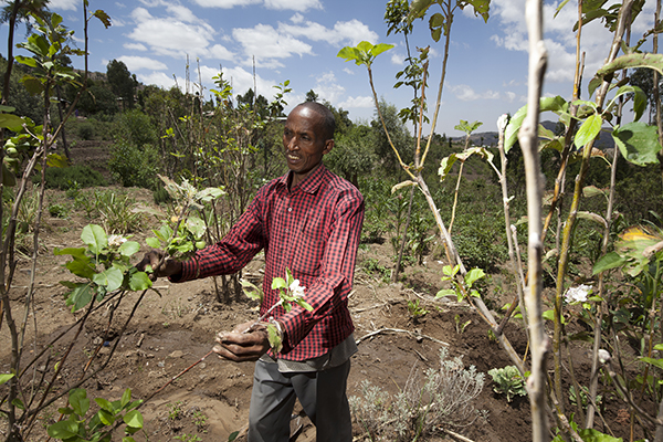 Isike Abdukerim, a poor farmer in the eastern part of Ethiopia, has learned new farming and irrigation practices that help him grow crops even when there's drought. Photo by Petterik Wiggers for CRS