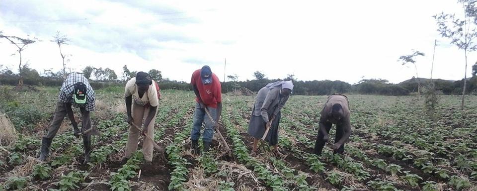 farming iin Kenya