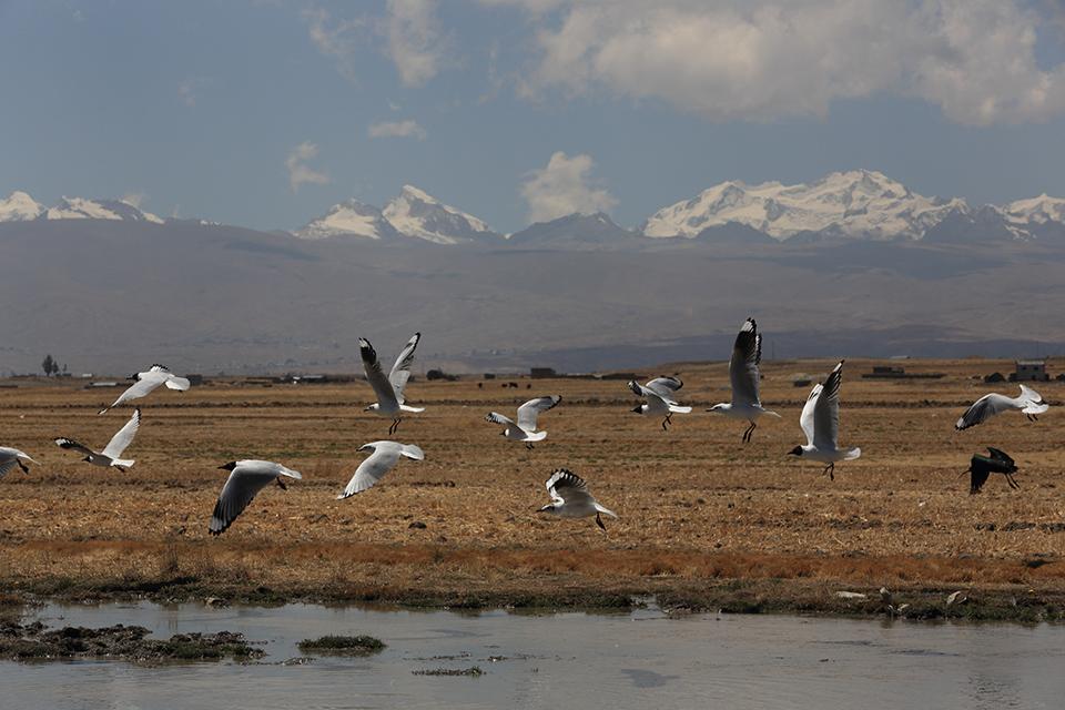 birds take flight in Bolivia