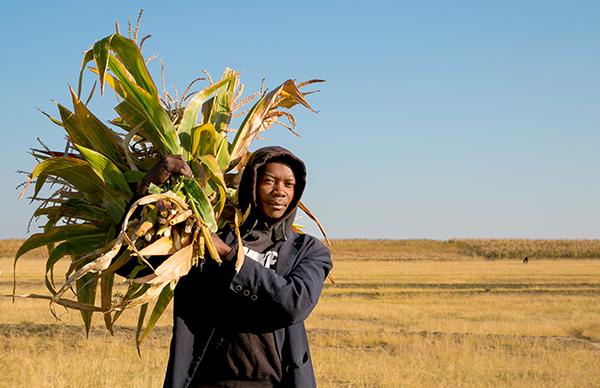 gathering fodder in Lesotho