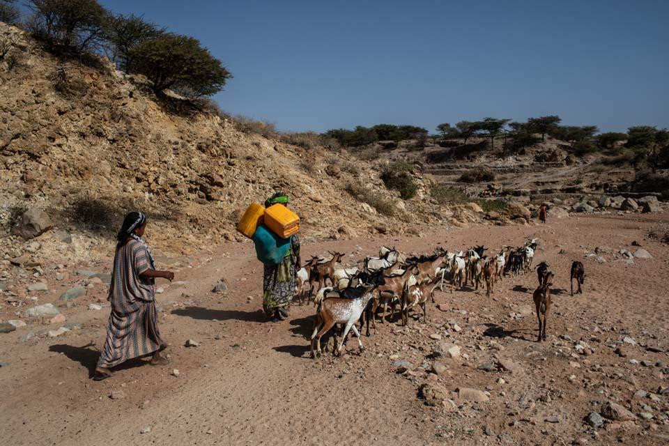 tending goats in Ethiopia