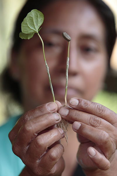 A worker holds grafted coffee plants at a coffee nursery in San Marcos, Guatemala. CRS helps increase farmer resilience wth efficient management, improved varieties, and expanded access to technical and financial services. Photo by Oscar Leiva/Silverlight
