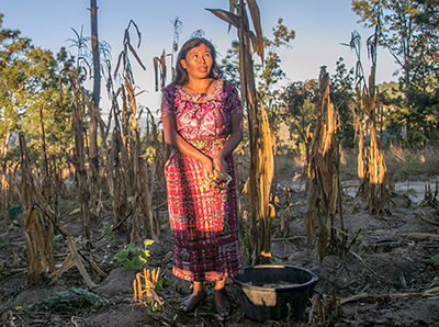 """A woman stands amid crops withered by drought in the """"dry corridor"""" of Guatemala. Photo by Philip Laubner/CRS"""