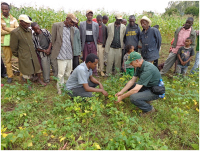 "Kandel shows farmers the differences in the color of the dry bean plants. ""Inoculation of the beans would be a simple solution to increase the productivity of the beans."" Copyright Hans Kandel, 2014. Used with permission."