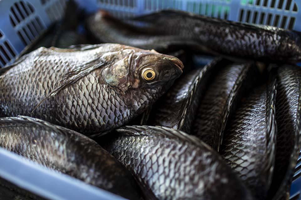 Kenya basket of fish
