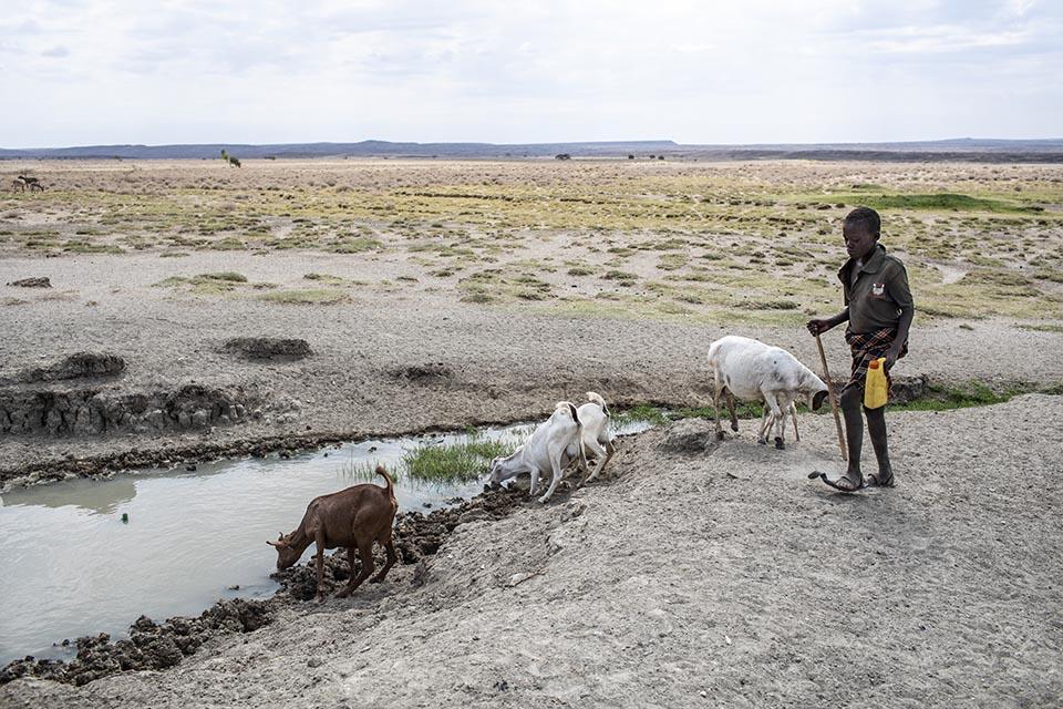 boy in Kenya tends goats