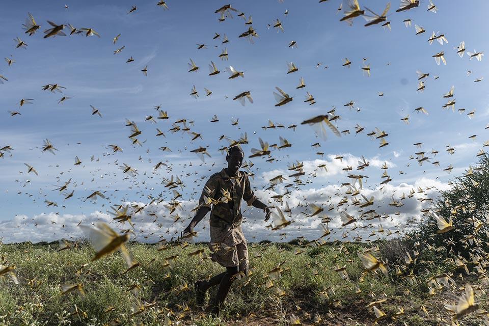 Kenya locust swarm