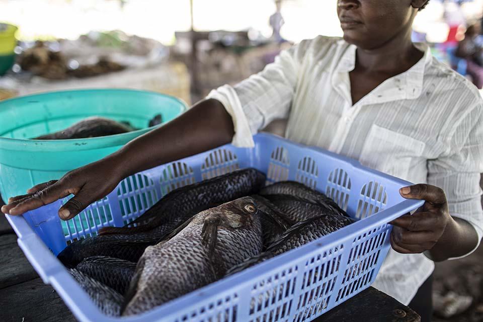 Kenya woman taking fish to market