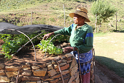 Thanks to keyhole gardening, introduced by CRS, Maabisi Phooko of Lesotho is able to grow vegetables year-round. Photo by Kim Pozniak/CRS