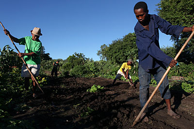 Robin Rasamimanana, left, of Madagascar and his son Jean Marie, behind him, till the soil on land passed down through the generations. Assisting them are Robin's nephew Damy, right, and helper Mananjara, in yellow. Photo by Sara A. Fajardo/CRS
