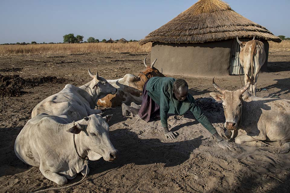 man tends cattle in South Sudan