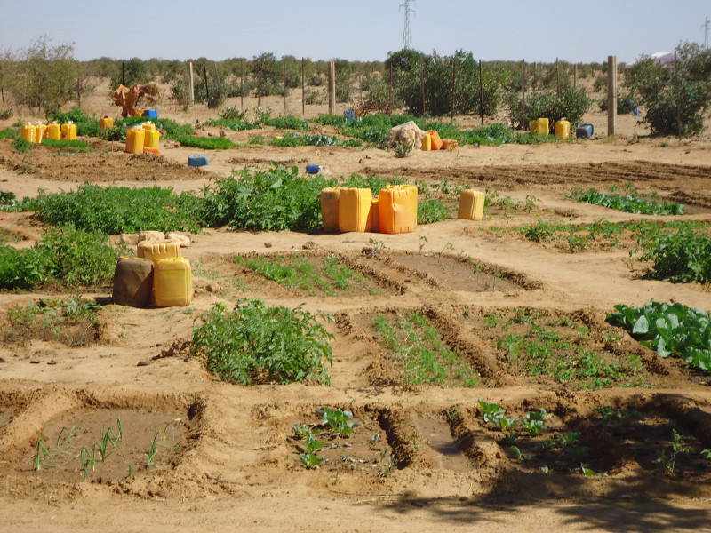 A dry-season garden in the village of Darel Beyda in the Brakna region of Mauritania, West Africa. How to build these gardens is something taught as part of the Brakna Resilience Initiative, a Catholic Relief Services project aimed at tackling poverty and