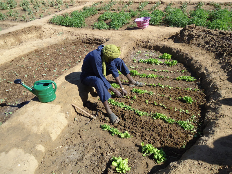 A half moon garden in the village of Darel Beyda in the Brakna region of Mauritania, West Africa. Funded by the US government's Office for Foreign Disaster Assistance (OFDA), CRS's Brakna Resilience Initiative project touches the lives of over 2 and a hal