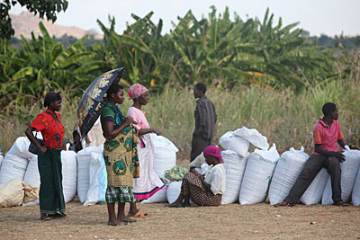 Chili farmers wait to sell their peppers at a monthly buyers market in Malawi. Photo by Sara A. Fajardo/CRS