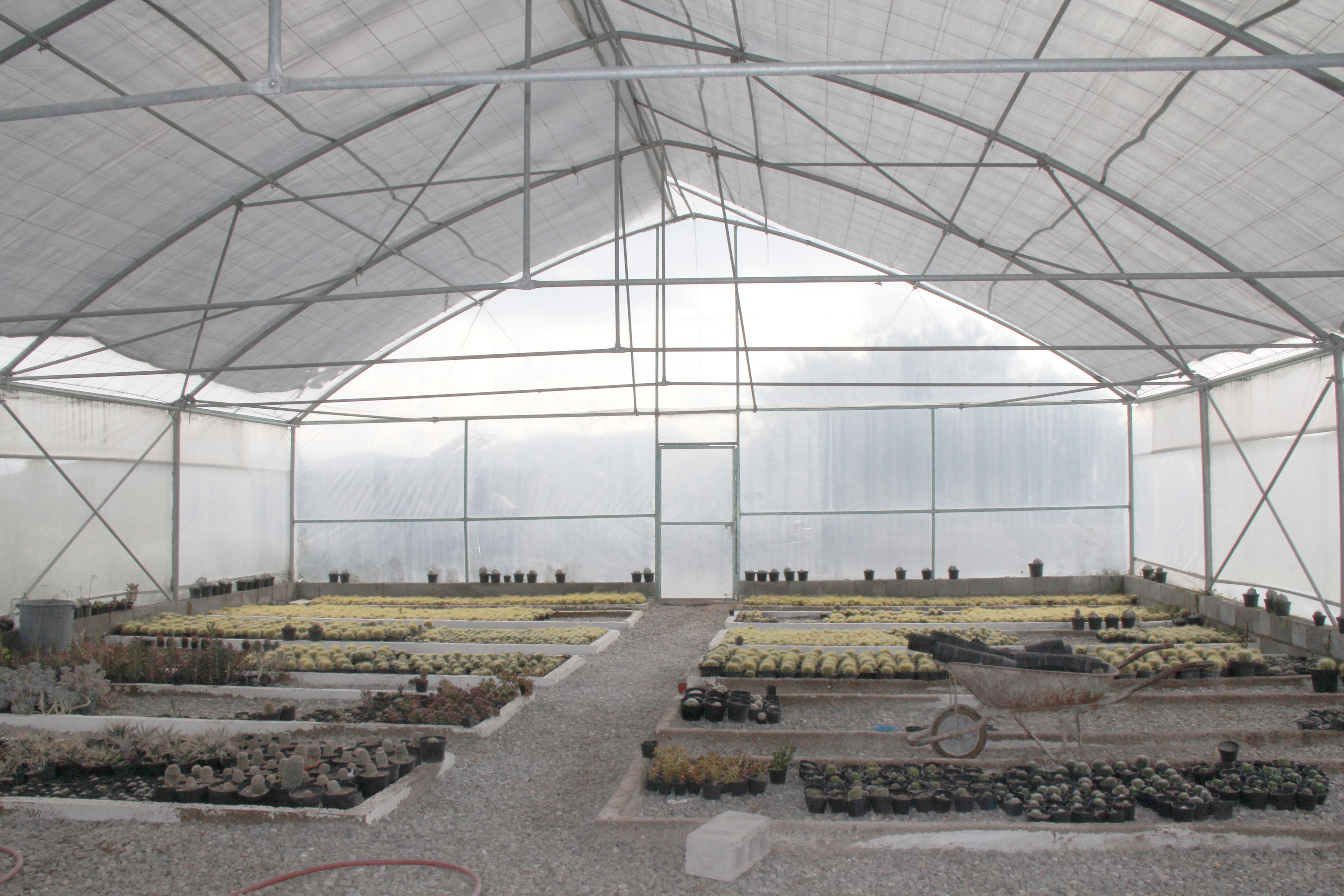 More than 100 hundred species of cacti are grown in the greenhouse. Photo by Christian Meléndez-López/CRS