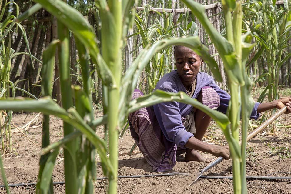 Mozambique farmer in field