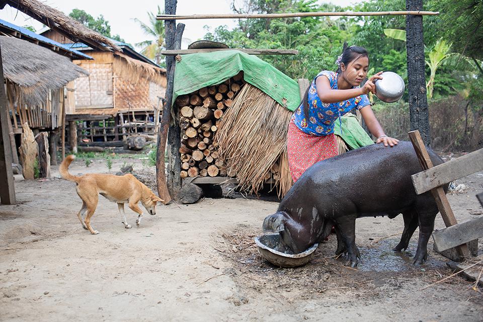 Myanmar farm scene