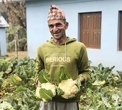Nepal man in garden holds cauliflower