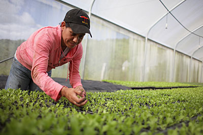 CRS helps people like Josefa Lambi in Nicaragua grow their own food. Here, Josefa checks on plants in a vegetable seedling greenhouse. Photo by Silverlight for CRS