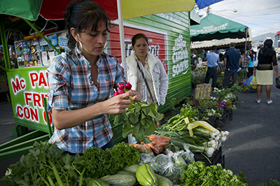 A group of women, Dios Proveera (God will Provide), grows and distributes vegetables as part of a savings group activity in San Antonio village near Estelli town in Nicaragua. Photo by Karen Kasmauski