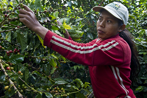 Lijia Martinez picks coffee as a seasonal worker in the San Jose area of Nicaragua. Photo by Karen Kasmauski for CRS