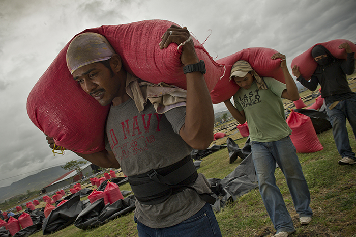 Workers in Nicaragua carry bags of coffee beans into the factory for processing. Photo by Karen Kasmauski for CRS