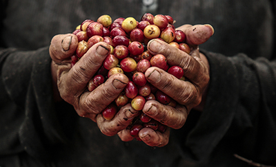 Coffee is only one of many products touched by modern-day slavery and forced labor. Photo by Oscar Leiva/Silverlight for CRS