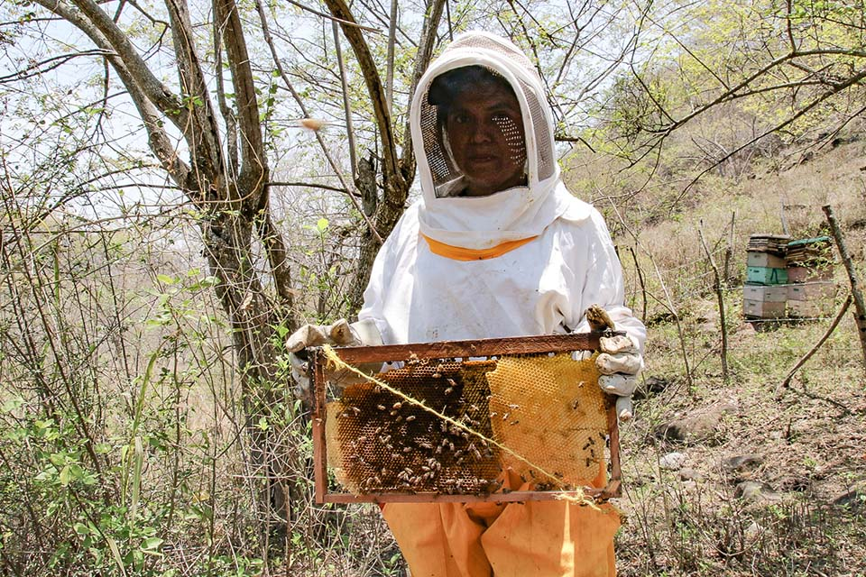 Nicaraguan beekeeper