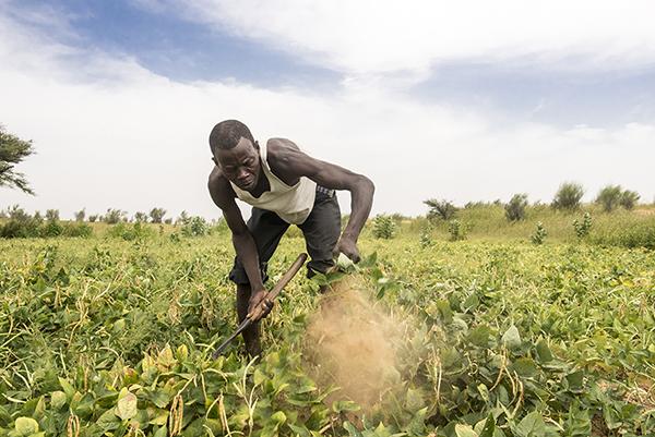 Adam Bassai works in his garden in Djetkoram village in the Diffa region of Niger. Photo by Michael Stulman/CRS