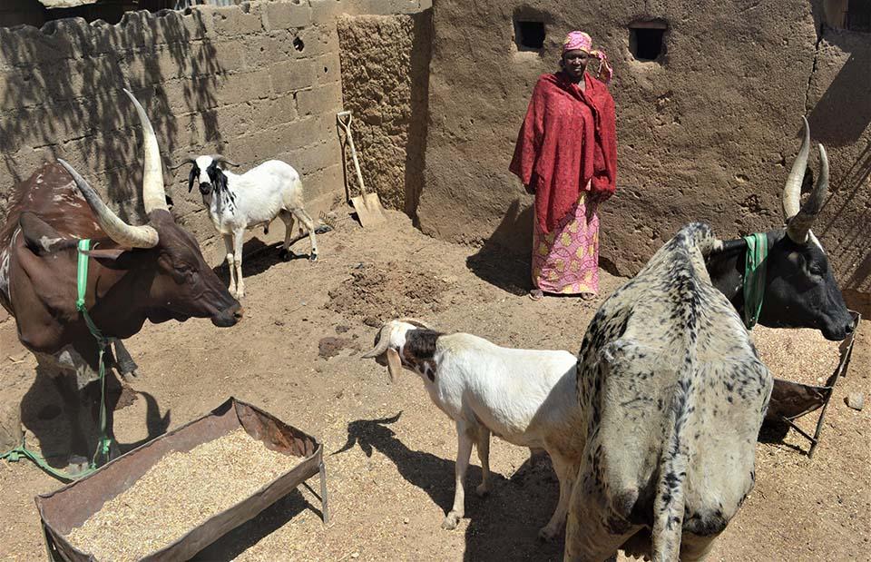 Nigerian woman and savings group member standing near her farm animals